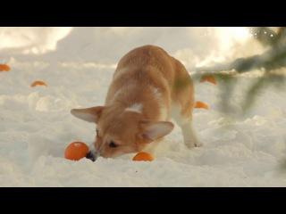 Dog Chow представляет самое активное поздравление с Новым Годом!