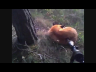 Необычные случаи на охоте! подборка приколов на охоте! . подборка приколов 2017