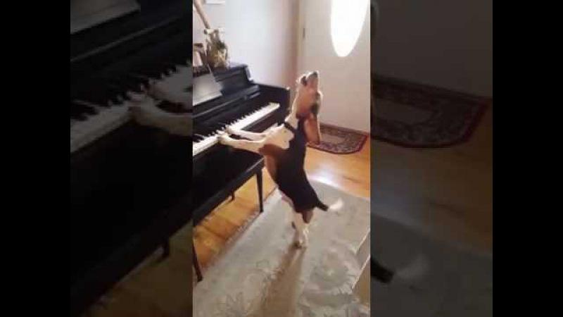 Собака играет на пианино и поет об ужасах жизни