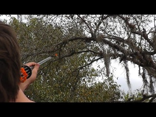 [GRAPHIC] Hunting Dove with Blowguns