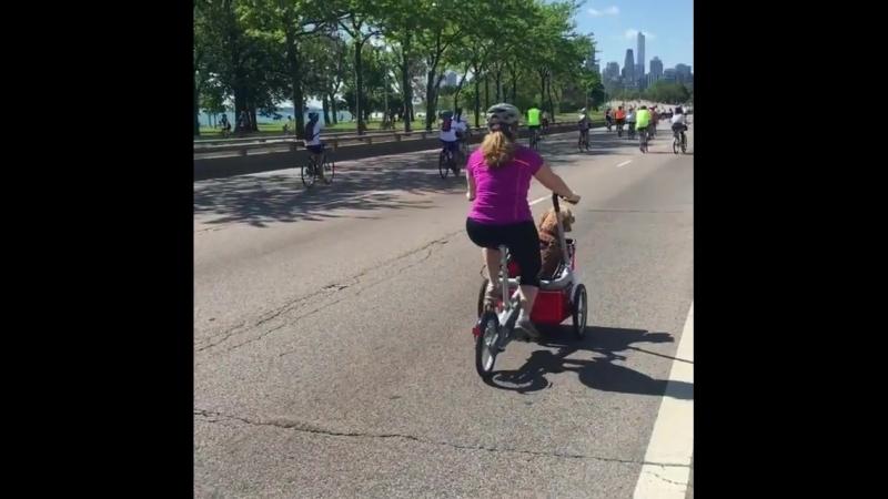 Велоколяска Taga bike с корзинкой