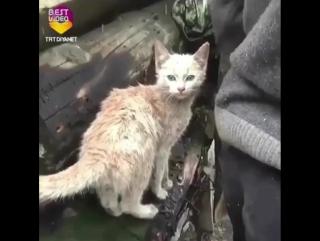 У дедушки сгорел дом. Все, что удалось спасти из пожара - это его кот