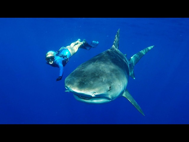 GoPro Freediving with Tiger Sharks in 4K