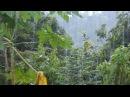 Тропический ливень в хостеле Болита (Корковадо, Коста-Рика)