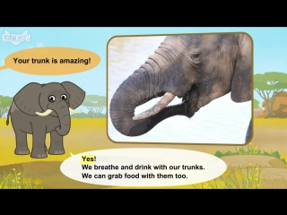 Meet the animals 19african elephant level 2 by little fox