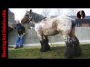 Top 25 - Тajwiększy konie - Koń ciężkich