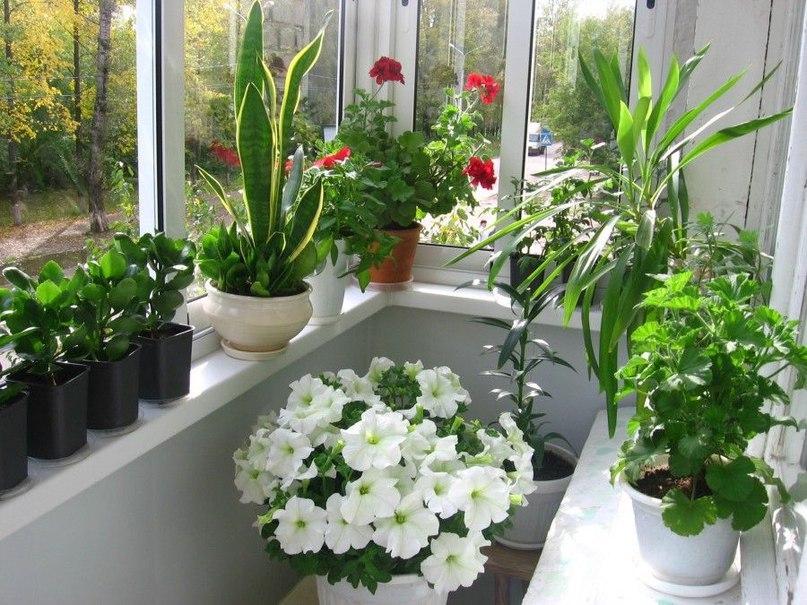 Удобрения для домашних цветов, изображение №2