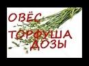 Дозы Торфогеля Торфуши для замачичвания семян Овса
