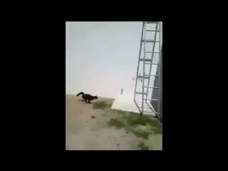 кот ниндзя