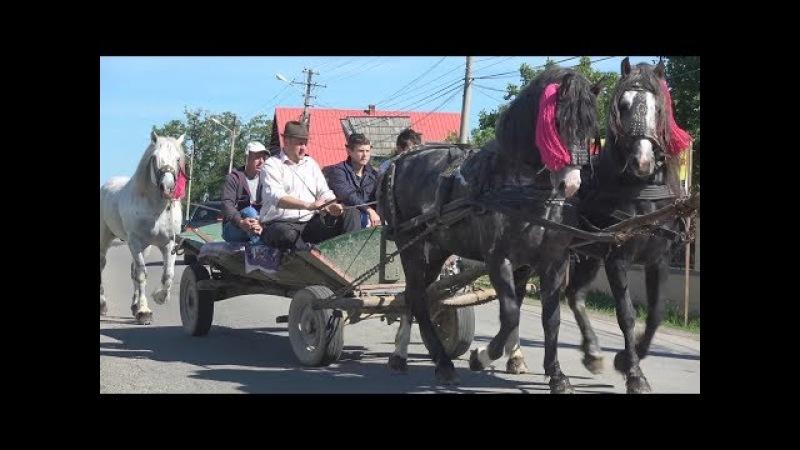 Targul de cai de la Marginea Suceava 28 05 2017