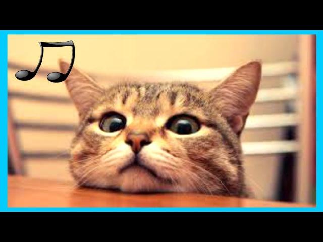 музыка предназначена для кошек расслабляющая музыку спать беспокойные кошка 2017 RUмузыка