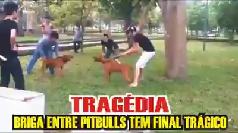 Собачья случка