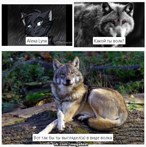 Тест ты волк картинками