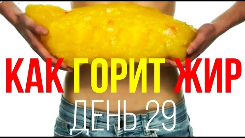 День № 29. Как сгорает жир и куда уходит лишний вес при похудении
