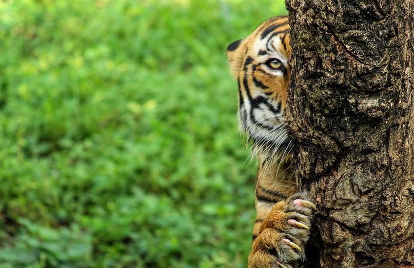 9 вещей, которые нужно сделать в Индии, чтобы по-настоящему ее узнать, изображение №4