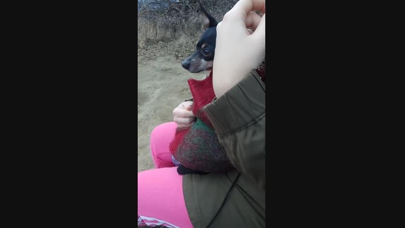собака-следак