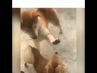 Funny_animalstv_buonj18n_cy.mp4