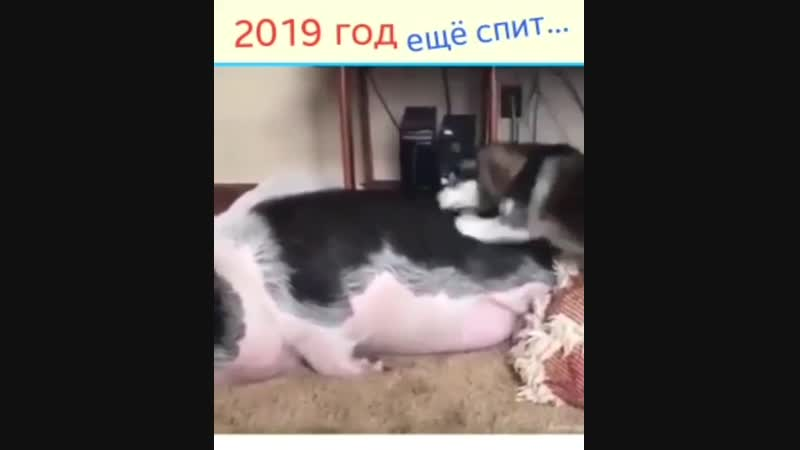 Video-0a2db6643ed53597570cf8334e471c80-V.mp4