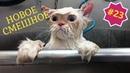 Приколы про животных. Смешное видео про котов, собак и не только. Выпуск 23