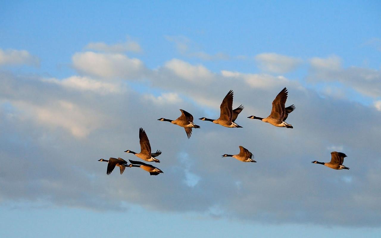 птицы летят косяком картинка кто верил
