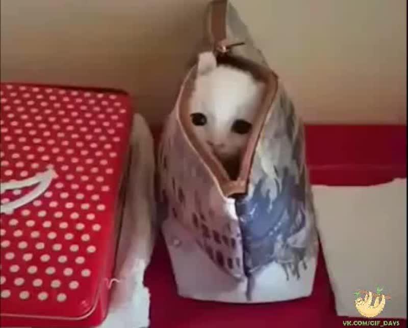 Кот кошельковый, редкий