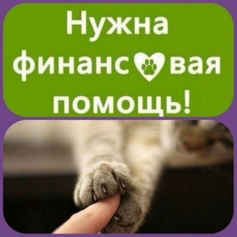 Картинки нужна помощь животным
