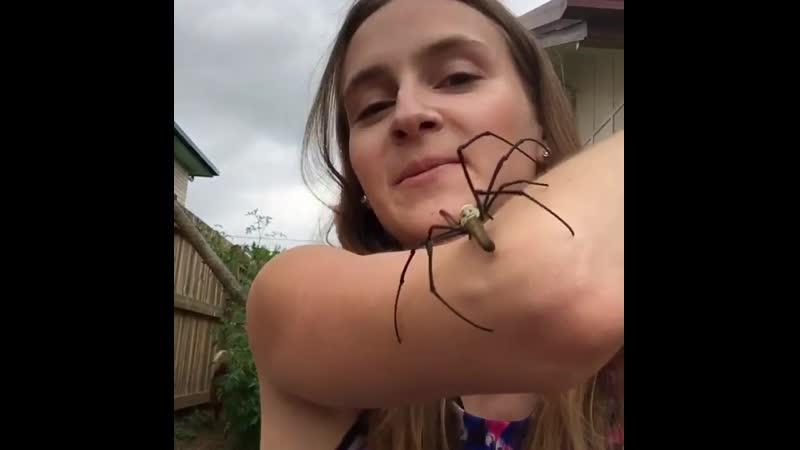 Tarni Roebuck - девушка, которая любит пауков