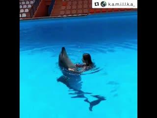 Танцы с дельфином в открытом бассейне Театра морских животных Акватория