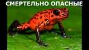 Смертельно опасные Бразилия Discovery Фильм BBC об опаснейших животных дикой природы