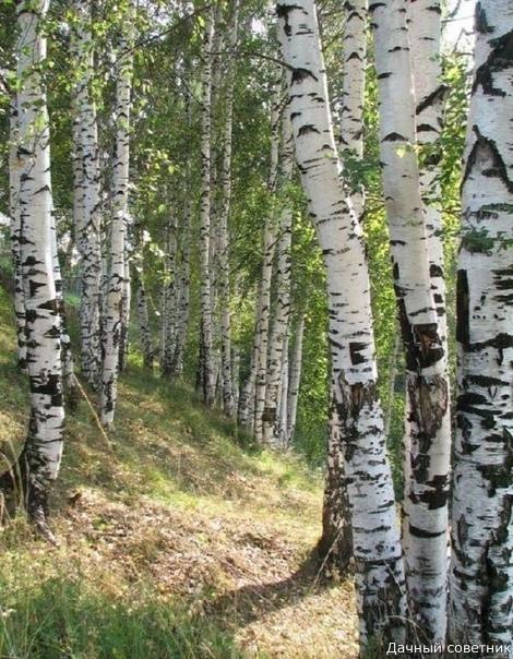 Природа лечит душу красотой.. И делает нас чуточку счастливей... Природа лечит боль украдкой,Легко касается души.И неразгаданной загадкойЕе напев звучит в тиши.Так потихоньку, незаметноВползает