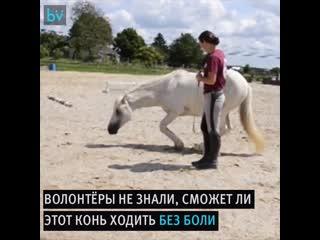 Коня держали в заточении десять лет и не ухаживали за ним