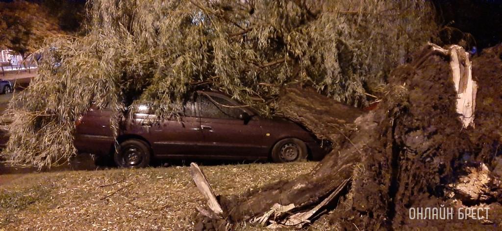 На бульваре рухнуло дерево на припаркованные автомобили
