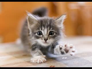 Маленький милый котёнок