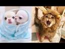 Say Đắm Trẻ sơ sinh động vật thật dễ thương Most amazing Animals Cute For Children