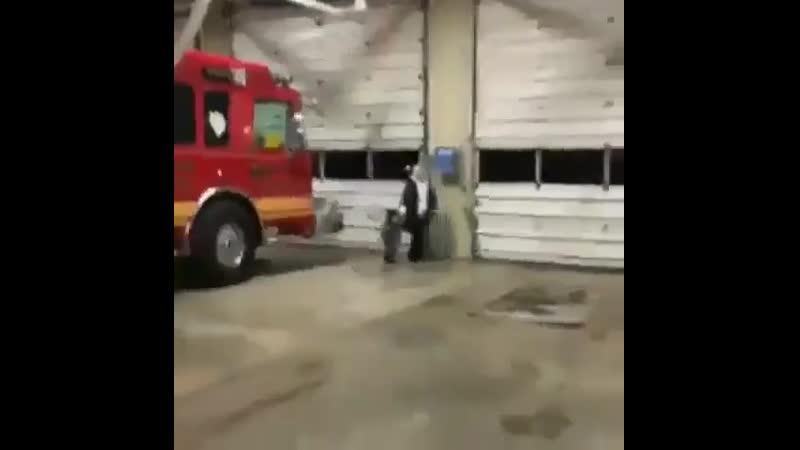 Unusual Videos