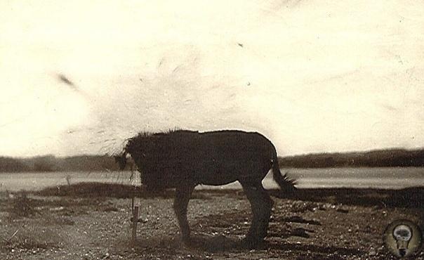 В 1878 году была изобретена технология, позволяющая фиксировать кадр на фотоплёнке почти без всякой задержки Через 3 года сотруднику американского военного института дали задание уничтожить