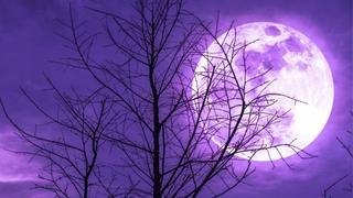 Miracle Sleep Music 432Hz | Fall Asleep Fast and Easy | Deep Healing Sleep Tones | Calming Music