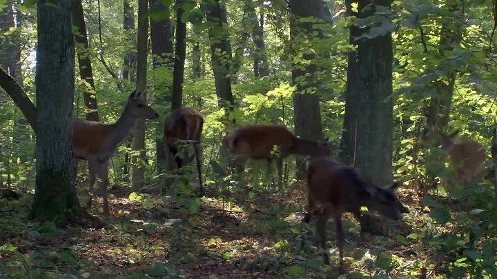 BBC Планета Земля Сезонные леса серия 10