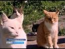 Калининградка продала квартиру, чтоб спасти бездомных кошек