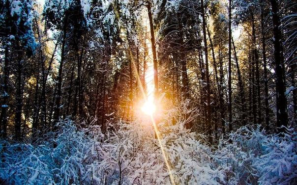 Обои На Телефон Зима Лес