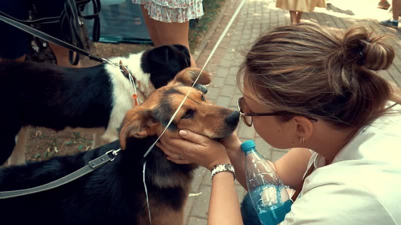 Фестиваль Собаки в городе 2019