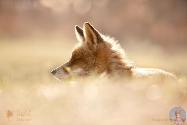 Давайте полюбуемся лисичками вместе!