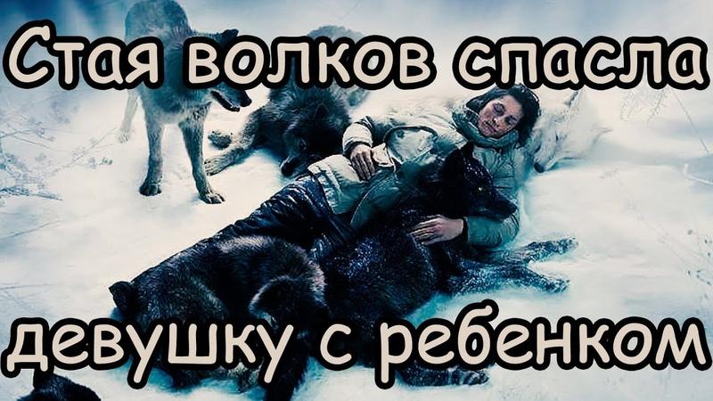Волки Спасли Младенца Женщина Рожала а Волки Согревали ее и малыша