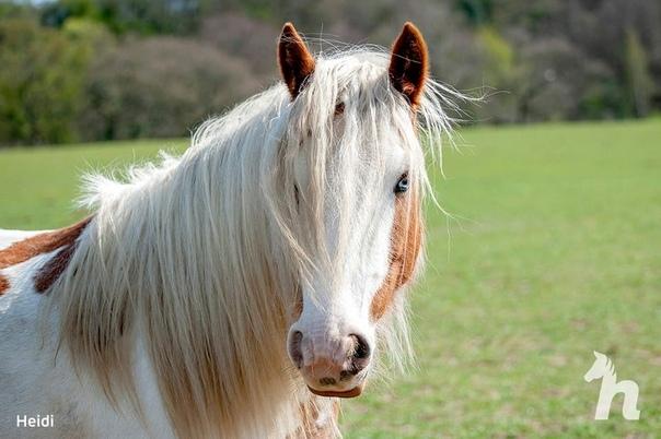 Волонтёры спасли лошадь, которую уже посчитали погибшей