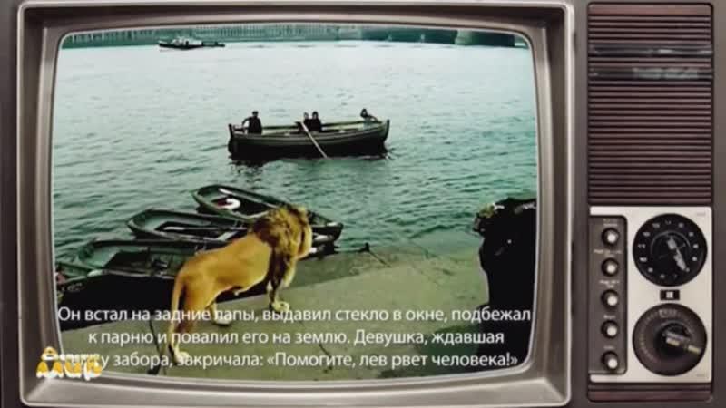 Фрагмент эфира заставка МультиХит и начало мультика Фиксики Детский Мир 22 01 2020