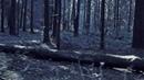 Анна Пингина - Ласточка. (OST - Стальная бабочка)