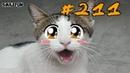 КОШКИ 2019 Смешные коты приколы с котами до слез – Смешные кошки – Funny Cats
