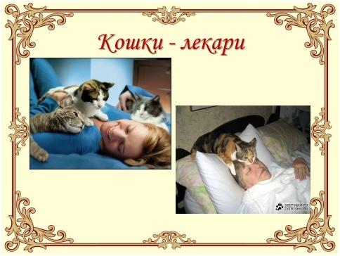 Урок доброты «Эти удивительные кошки», изображение №3