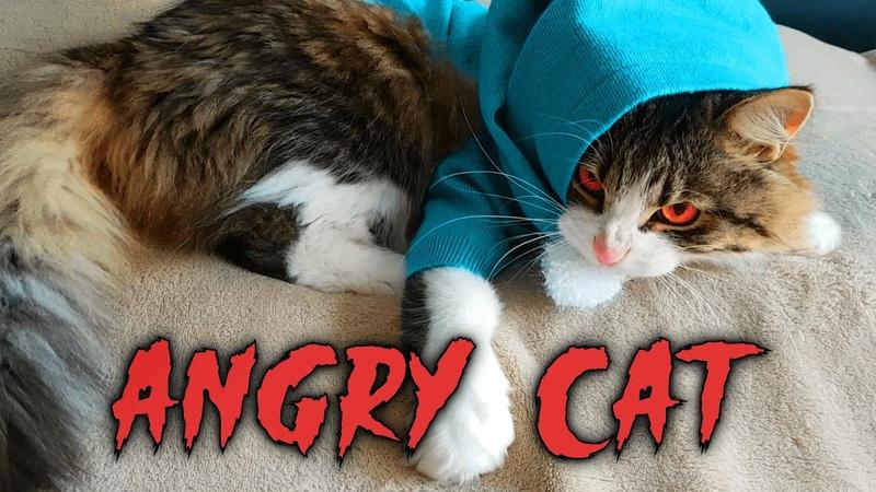 злой кот смешное видео angry cat