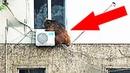 10 Удивительных Побегов Животных из Зоопарка